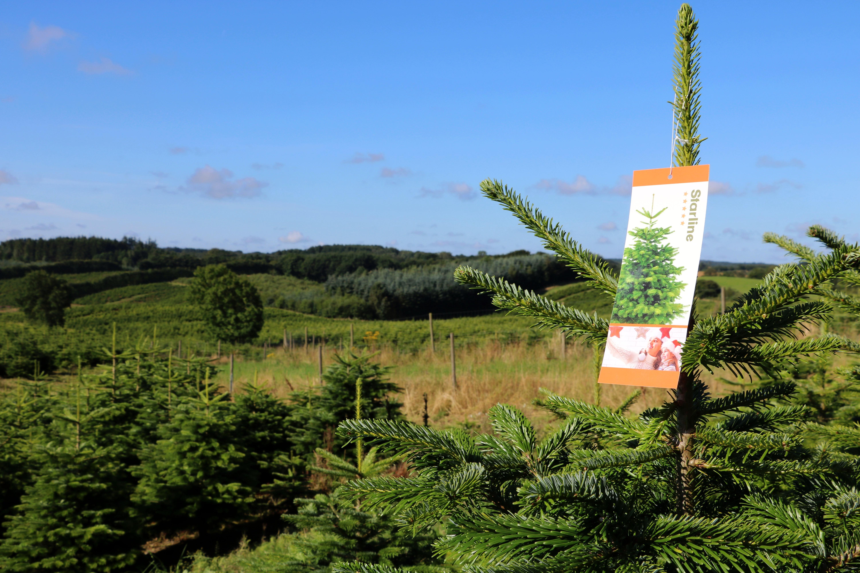 Boomkwekerij kerstbomen Denemarken
