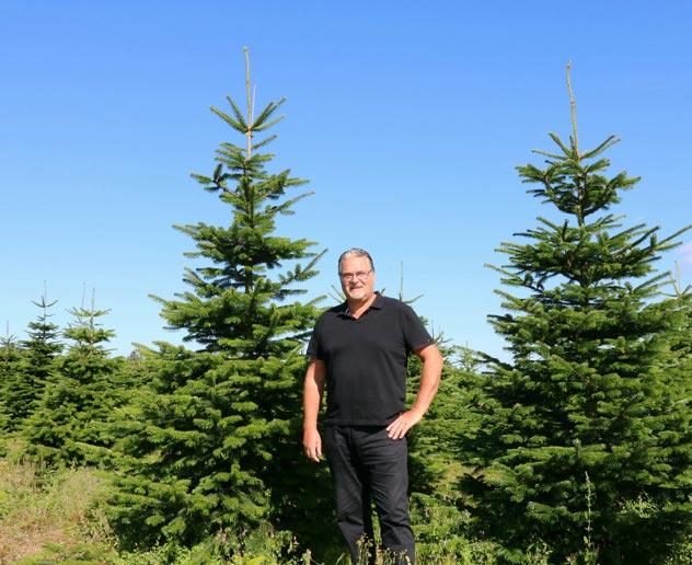Poppelaars Kerstbomen Bomenkwekerij En Groothandel In Breda